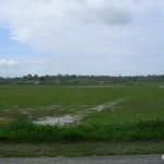 Picauville, les marais