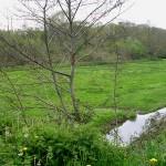 Cerisy-la-Forêt, le cours d'eau de l'Elle